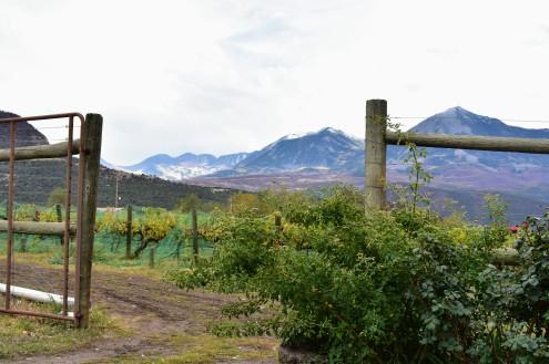 Stone Cottage Winery