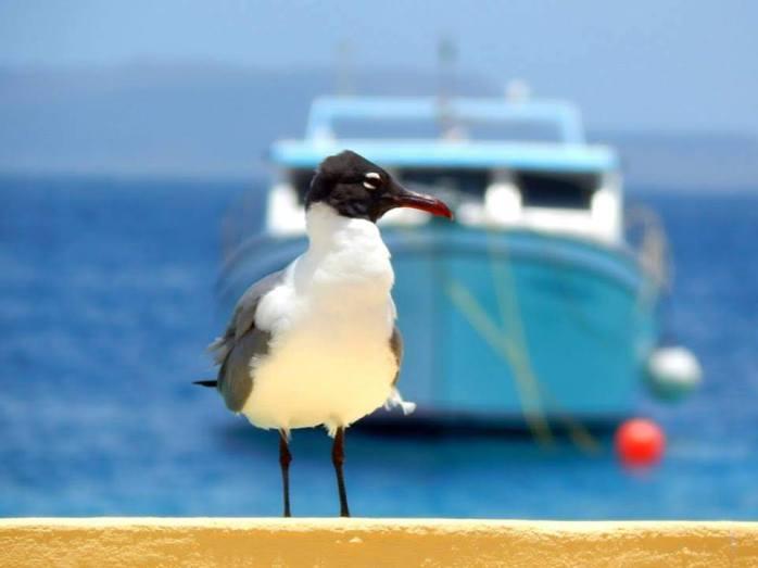bonaire bird
