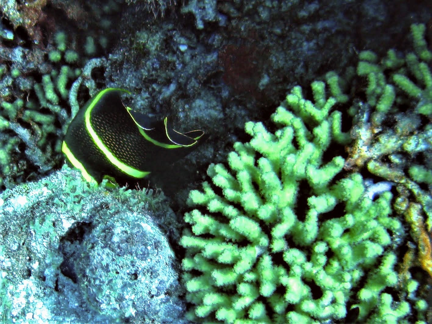 black and yellow tropical fish