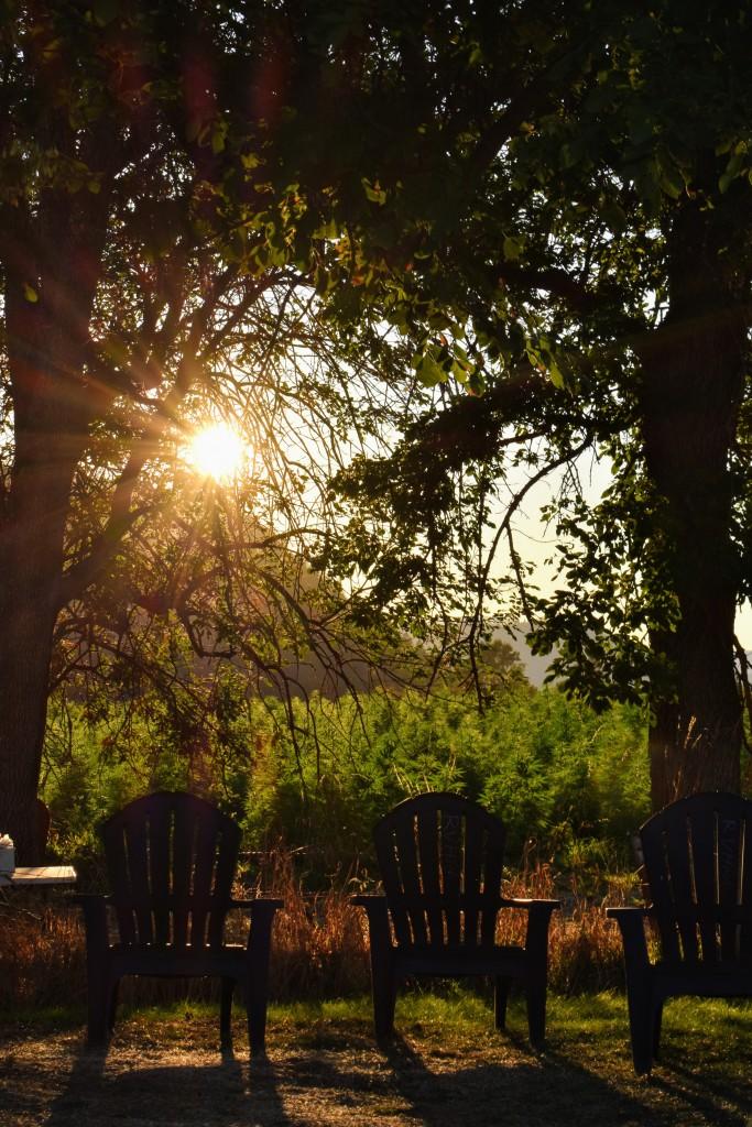 sunset through the trees and hemp fields