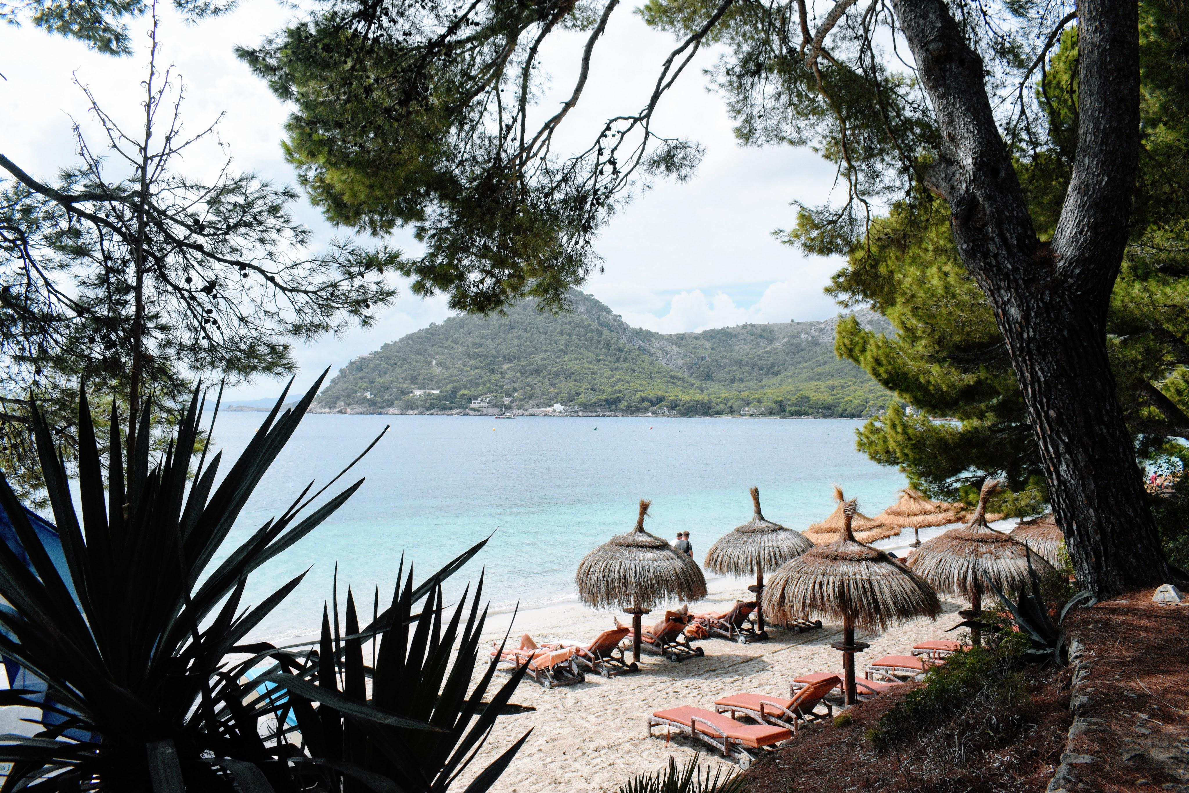beach with talapus